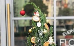 """Sự thật """"ngã ngửa"""" ít người ngờ về cây thông Noel giá rẻ cực hot"""
