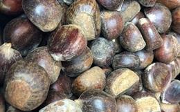 Hạt dẻ TQ 50-60.000 đồng/kg gắn mác hạt dẻ Trùng Khánh, Sapa thổi giá cao gấp 3