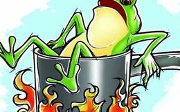 Câu chuyện 'luộc ếch' và bài học nhớ đời về sự ổn định: Đừng quên rằng, cái gì cũng có giá của nó!