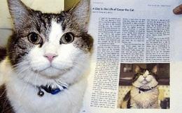 Oscar: 'Chú mèo báo tử' dự đoán đúng hơn 100 cái chết, được cả tạp chí y khoa nổi tiếng ghi nhận khả năng đặc biệt