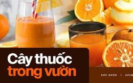 Món ăn, bài thuốc siêu hay từ quả cam - Cam đang mùa rộ, không tận dụng thật đáng tiếc!