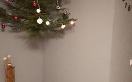 Giáng sinh sắp đến, cư dân mạng truyền tay nhau bí kíp bảo vệ cây thông Noel trước các Hoàng thượng