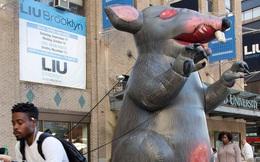 Càng mở chiến dịch diệt chuột, chúng ta càng tạo ra những quần thể 'siêu chuột' biến đổi gen đáng sợ hơn