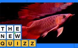 Chuyện nghịch lý về một loài cá kỳ lạ: Vật cảnh nhưng có giá ngang xe hơi tiền tỉ, khiến nhiều người phải bỏ mạng vì chúng