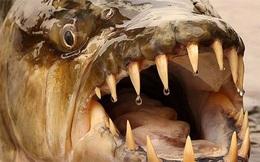 1001 thắc mắc: Thủy quái nào khiến cá sấu cũng phải e ngại?