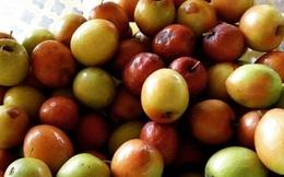 Tác dụng chữa bệnh của táo tàu khô