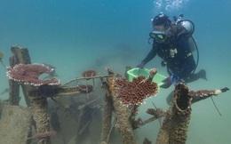 Trung Quốc tàn phá san hô Biển Đông bằng cuộc quân sự hóa