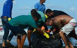 4.400 km bờ biển Brazil chết tức tưởi vì thủy triều đen bí ẩn