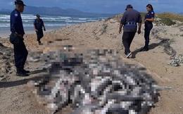 Hình ảnh kinh hoàng khi hàng tá xác cá chất thành đống trên bờ biển cho thấy sự tàn bạo của hoạt động khai thác vi cá mập