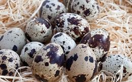 Trứng chim cút: Thuốc bổ trung ích khí