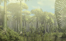 Các nhà khoa học phát hiện khu rừng cổ đại lâu đời nhất trong lịch sử Trái Đất, cách chúng ta 385 triệu năm