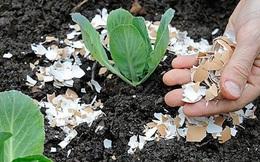 7 tác dụng bất ngờ đến khó tin của vỏ trứng trong việc làm vườn