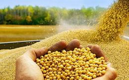 """Điều gì xảy ra khi hạt đậu tương, dầu cọ bị các nước dùng làm """"vũ khí"""" đối đầu nhau?"""