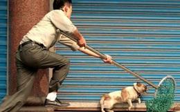 Nữ chủ quán thịt chó cấu kết, chuẩn bị đồ nghề để nhóm trộm chó, tiêu thụ 14 tấn thịt