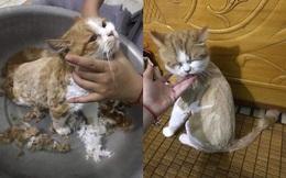 """Sau vài đường kéo của cô chủ, mèo con """"lột xác"""" kinh dị, bức ảnh cuối khiến tất cả bật cười"""