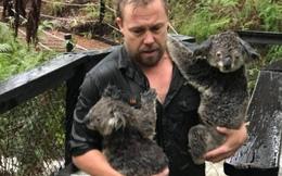 Hết cháy rừng, koala lại oằn mình chống lũ lụt