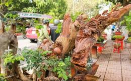 Chiêm ngưỡng rồng, cá chép trổ lộc hô giá trăm triệu ở Đắk Lắk