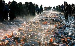 24h qua ảnh: Ngư dân Trung Quốc thu hoạch cá vào mùa đông