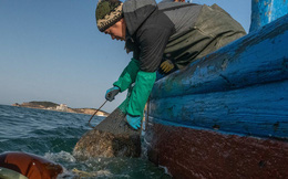 """Nhu cầu ngày càng tăng của người TQ đẩy 'linh dược"""" dưới đáy biển tới nguy cơ tuyệt chủng"""