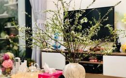 Hoa tuyết mai hot nhất Tết này nhưng bạn đã biết cách chọn mua và cắm chưa?