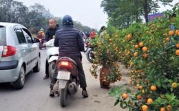 Ngày 29 Tết: Quất cảnh bán tràn đường, lan hồ điệp phá giá giảm sốc 50% đẩy hàng tồn