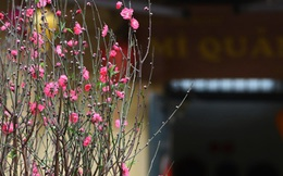 Mùng 1 Tết, miền Bắc đón năm mới trong mưa rét, miền Nam nắng ấm