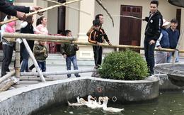 Độc đáo hội chợ câu vịt, bịt mắt bắt lợn ngày mùng 3 Tết ở Nam Định