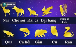 12 con vật tượng trưng cho cá tính người: Rắn là đại diện cho tinh thần lãnh đạo
