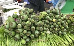 Cây thuốc phiện bày bán công khai ở phiên chợ biên giới Việt - Lào