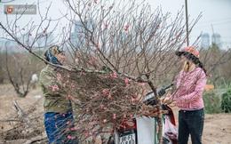 Đào Nhật Tân tấp nập xuống phố, người dân thích thú mua thưởng thức không khí Tết sớm