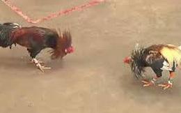 """Mâu thuẫn khi xem đá gà, anh em ruột đánh nhau với """"người lạ"""" khiến 2 người bị thương"""