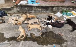 Thả bả bắt chó mèo hàng loạt, 2 cẩu tặc là anh em ruột bị người dân bắt quả tang