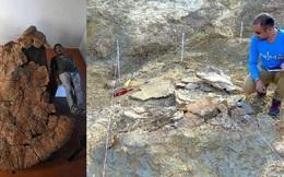 Phát hiện hoá thạch rùa tiền sử to bậc nhất thế giới ở Colombia