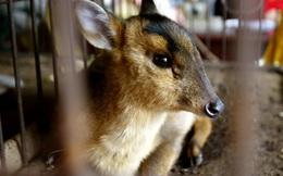 """Tiêu thụ thịt động vật hoang dã tại TQ: Khi những bài thuốc hàng trăm năm """"phản tác dụng"""""""