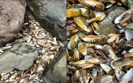 Video: Vẹm xanh chết hàng loạt, trải dài khắp bờ biển New Zealand