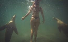 Quyết định bơi cùng bầy sư tử biển, cô gái trẻ gặp phải sự cố đáng sợ