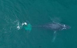 24h qua ảnh: Cá voi lưng gù bị mắc lưới đánh cá ở Mexico