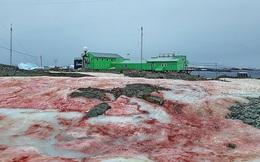 Giải mã hiện tượng tuyết đỏ như máu bao phủ quanh trạm nghiên cứu ở Nam cực