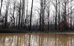 Australia đón cơn mưa lớn chưa từng có trong 20 năm