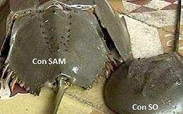 Ăn sam biển bị ngộ độc, 7 người nhập viện cấp cứu, 1 bé gái tử vong