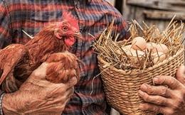 """""""Gà có trước hay trứng có trước?"""" và câu trả lời giúp người đàn ông trở thành ông chủ lớn"""