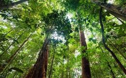 Rừng nhiệt đới đang mất dần khả năng hấp thụ CO2