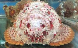 Cá mặt quỷ siêu dữ tợn giá gần 10 triệu đồng/con ở Hà Nội
