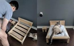 Thấy mèo hay ngủ ké người yêu, chàng trai có hành động bất ngờ và câu chốt khiến cô gái bật cười