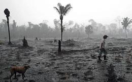 Điều gì khiến rừng rậm Amazon khổng lồ cũng có thể sụp đổ trong vài thập kỷ tới?