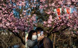 24h qua ảnh: Cặp đôi chụp ảnh với hoa anh đào ở Nhật Bản