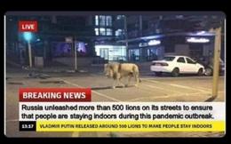 """Thông tin """"Nga thả 500 con sư tử để người dân không ra khỏi nhà trong dịch COVID-19"""" là tin giả"""