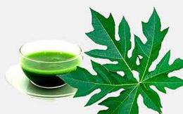 22 lợi ích sức khỏe đáng kinh ngạc của lá đu đủ