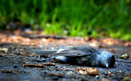 Thiên nhiên kỳ bí: Bí mật về vùng đất khiến hàng ngàn con chim đua nhau tự sát