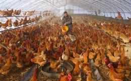 """COVID-19 biến nông trại thành """"ốc đảo"""": Nông dân TQ cay đắng nhìn nông sản thối hỏng từng ngày"""